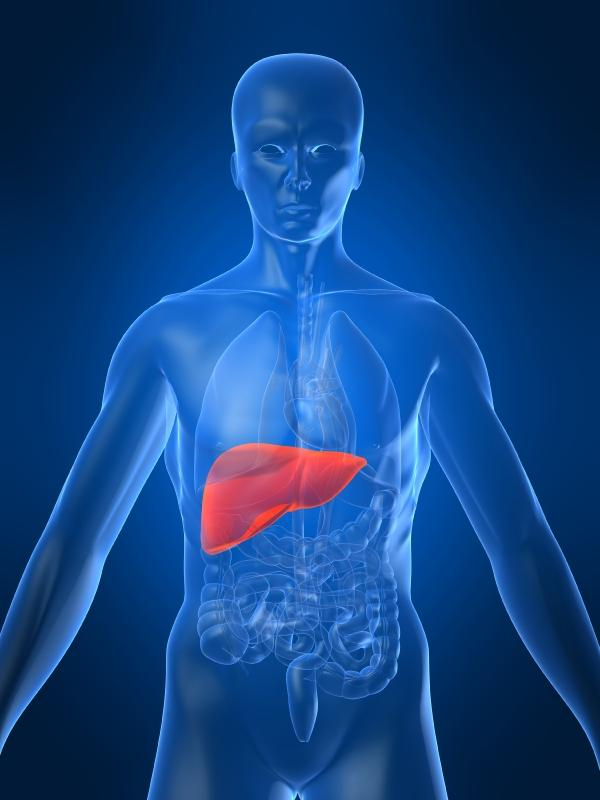 the liver function glucose